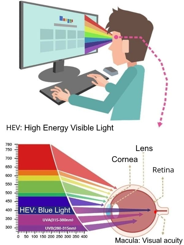 Blue light damages the retina
