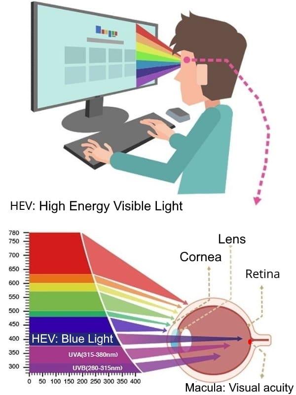 Blue light damages the retina